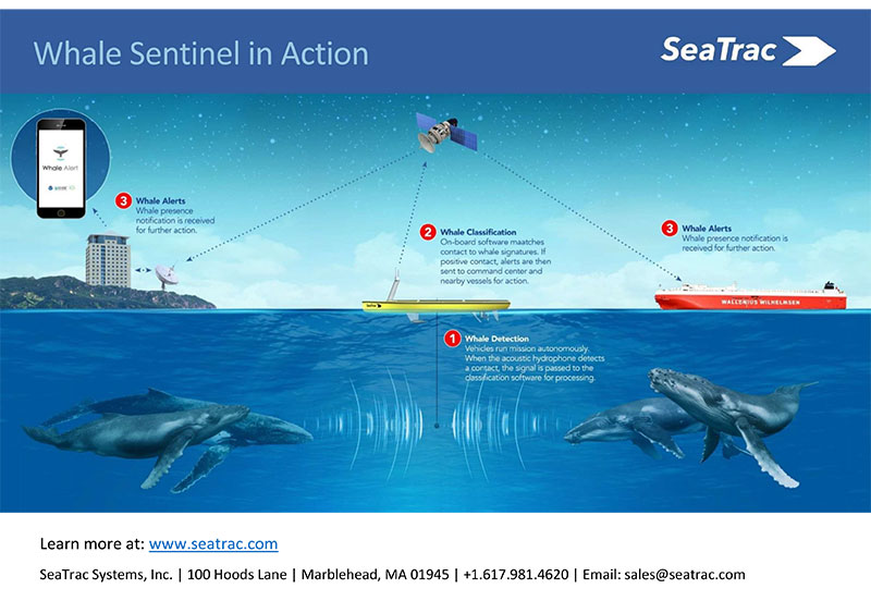 SeaTrac's Whale Sentinel Finalist for $100,000 Ocean Innovation Award